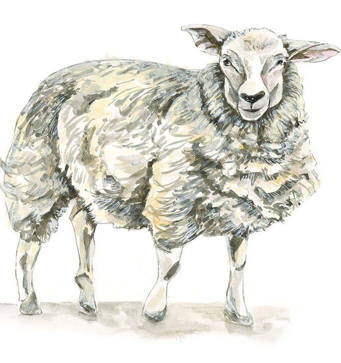 Sheep Print